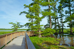 Lac Reelfoot Images libres de droits