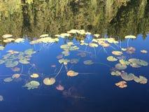 Lac reflétant des plantes aquatiques Image stock