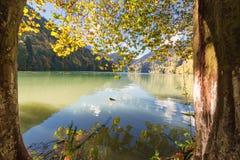 Lac Ritsa abkhazia Photographie stock libre de droits