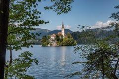 Lac saigné avec l'île en Slovénie photos libres de droits