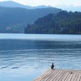 Lac saigné en Slovénie photographie stock libre de droits
