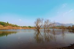 Lac serein en été photographie stock libre de droits
