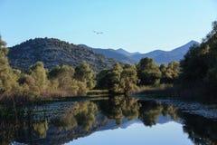 Lac Skadarsko, Monténégro Photos libres de droits