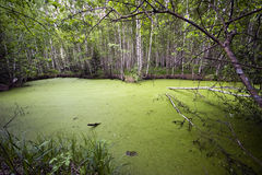 Lac sombre de source Image libre de droits