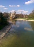 Lac spring avec des canards de natation Photo stock