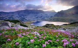 Lac sur la montagne et les fleurs Image stock