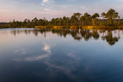 Lac swamp Photo stock