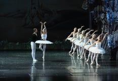 Lac swan, lac émouvant swan de histoire-ballet d'amour Photo libre de droits
