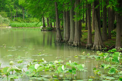 Lac Tai Wuxi China island de tortue Image libre de droits