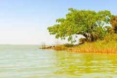 Lac Tana en Ethiopie Image stock