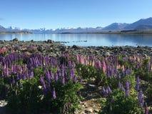 Lac Tekapo au Nouvelle-Zélande Photo libre de droits