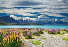 Lac Tekapo, Nouvelle Zélande Photo stock