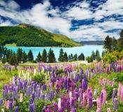 Lac Tekapo, Nouvelle Zélande Image stock