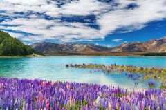 Lac Tekapo, Nouvelle Zélande Photos stock