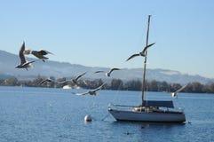 Lac Thun avec le bateau et les mouettes Image stock