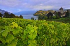 Lac Thun entouré par le vignoble près du château de Spiez Photographie stock libre de droits