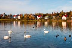 Lac Tjornin à Reykjavik photographie stock libre de droits