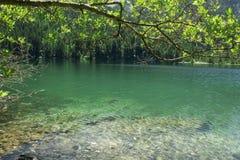 Lac Tovel Trentino Alto Adige, Italie Photographie stock libre de droits