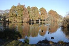 Lac tranquille Photos libres de droits