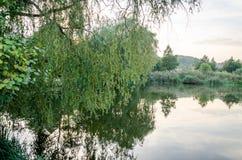 Lac tranquille de forêt avec des algues entourées par des arbres, des buissons et des roseaux Images stock