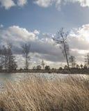 Lac venteux avec des roseaux dans le premier plan images libres de droits