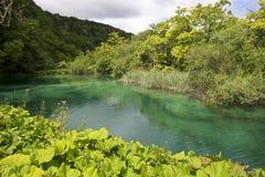 Lac vert Photos libres de droits