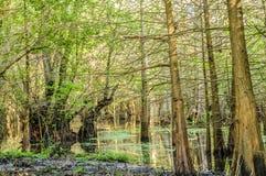 Lac vert Image stock