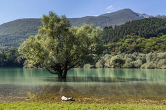Lac vert photographie stock
