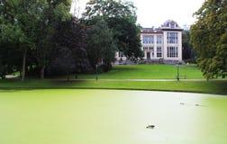 Lac vert avec des algues photos libres de droits