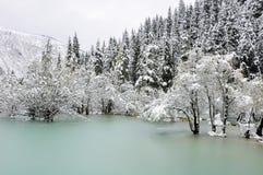 Lac vert congelé en montagne de forêt de pin Image stock