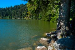 Lac vert in the Vosges mountains. Beautiful mountain lake `lac vert` in the Vosges mountains in France royalty free stock images