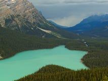 Lac vibrant Peyto entouré par Rocky Mountains Photographie stock