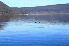 Lac Vico Image stock