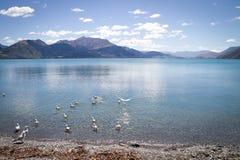 Lac Wakatipu Photographie stock libre de droits