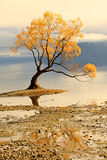 Lac Wanaka, île du sud Nouvelle-Zélande Photo stock