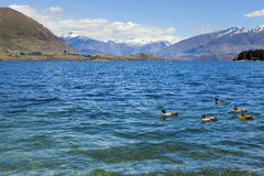 Lac Wanaka Photos stock