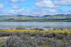 Lac Wildflower Photo stock