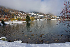 Lac winter avec des canards Images stock