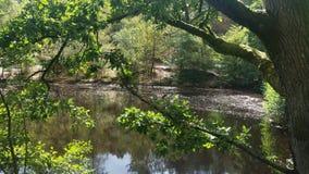 Lac woodland Image stock