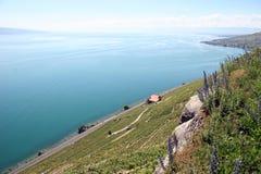 Laca Genebra Foto de Stock Royalty Free