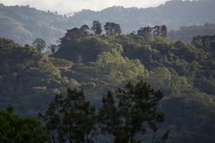 LaCarpintera tropisk skog Royaltyfri Foto