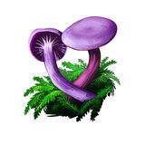 Laccaria amethystina amethyst deceiver, colored mushroom, grows in coniferous forests. Digital art illustration, natural food.