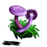 Laccaria amethystina amethyst deceiver, colored mushroom, grows in coniferous forests. Digital art illustration, natural