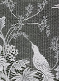 Lace bird. Royalty Free Stock Images