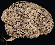 Lace brains. Lace pattern forming a human brains shape stock illustration