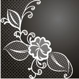Lace corner white Royalty Free Stock Photos