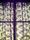 Lace Curtains Royalty Free Stock Photos
