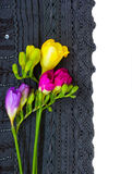 Lace flowers border. Black lace and freesias border isolated on white royalty free stock photography