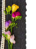 Lace flowers border. Black lace and freesias border isolated on white stock image