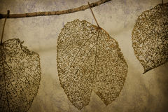 Lace Leaves Stock Image